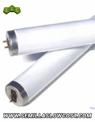 Fluorescente Philips Trifósforo Luz Blanca