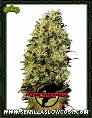 Chusticiero Man - La semilla de la Weed Serie