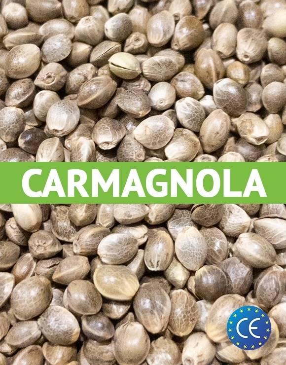 Semillas de Cáñamo Carmagnola Certificadas