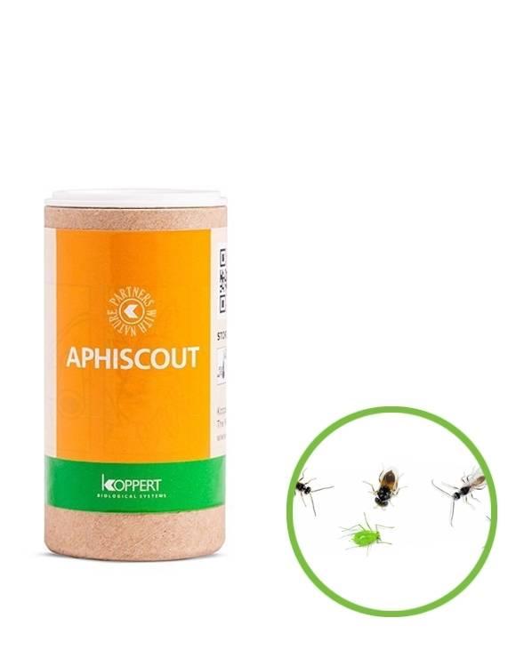 Aphiscout (250 avispas para pulgón)