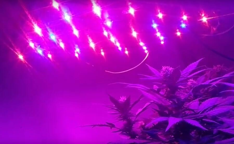 iluminación led cultivo marihuana