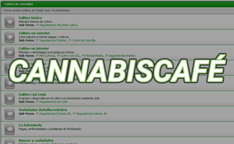 cannabiscafé