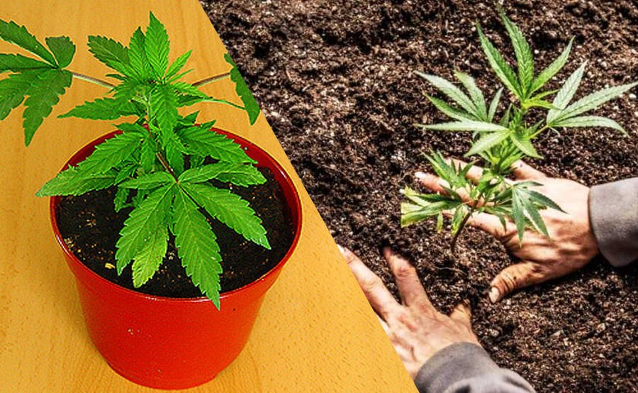 plantar esquejes