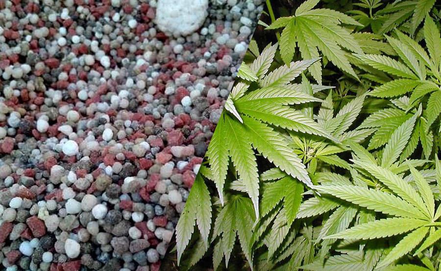 NPK y Marihuana