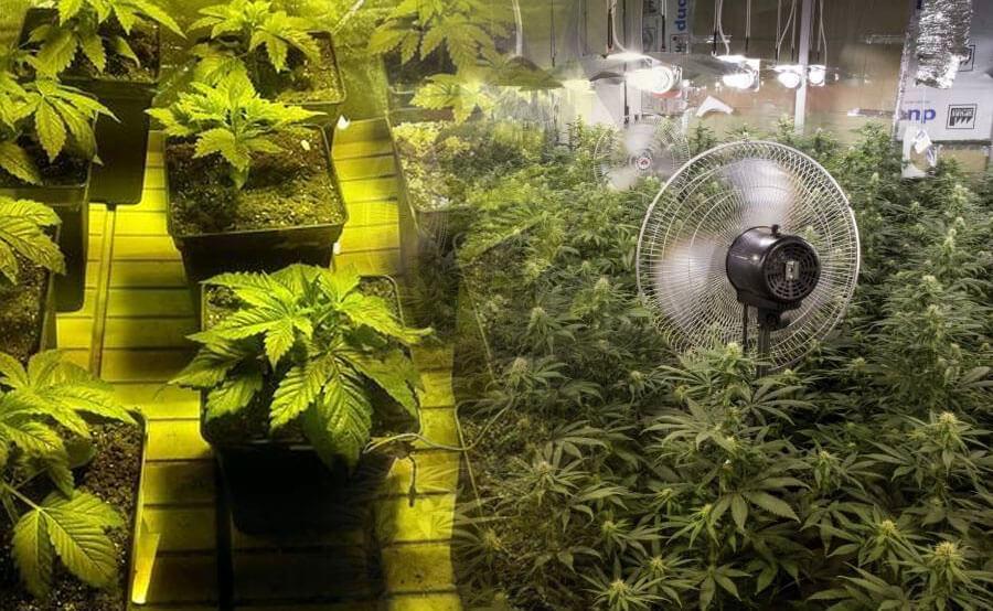 Cuarto de cultivo de marihuana