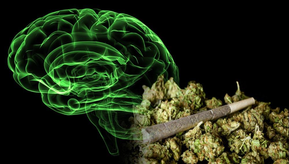 cerebro y porros