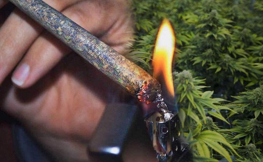 porros de marihuana adelgaza