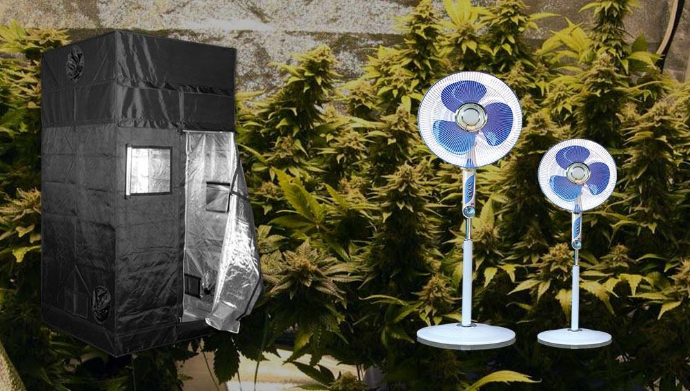 aire de cultivo