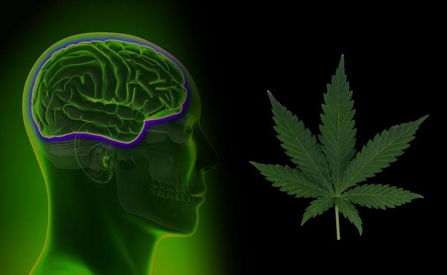 cannabis y neurología