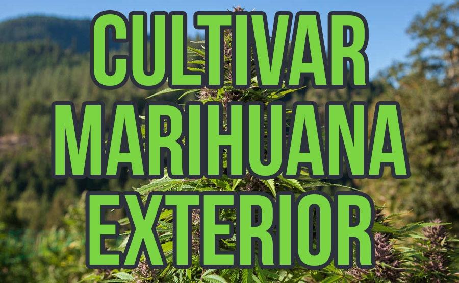 cultivar marihuana exterior