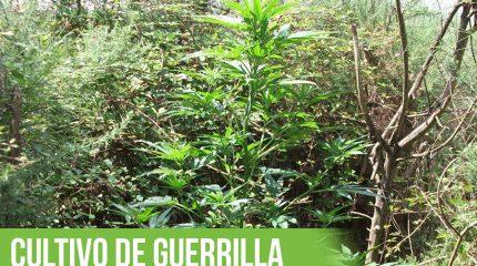 Portada del artículo que explica el cultivo de guerrilla