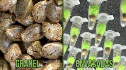 Portada del artículo sobre semillas a granel vs de banco