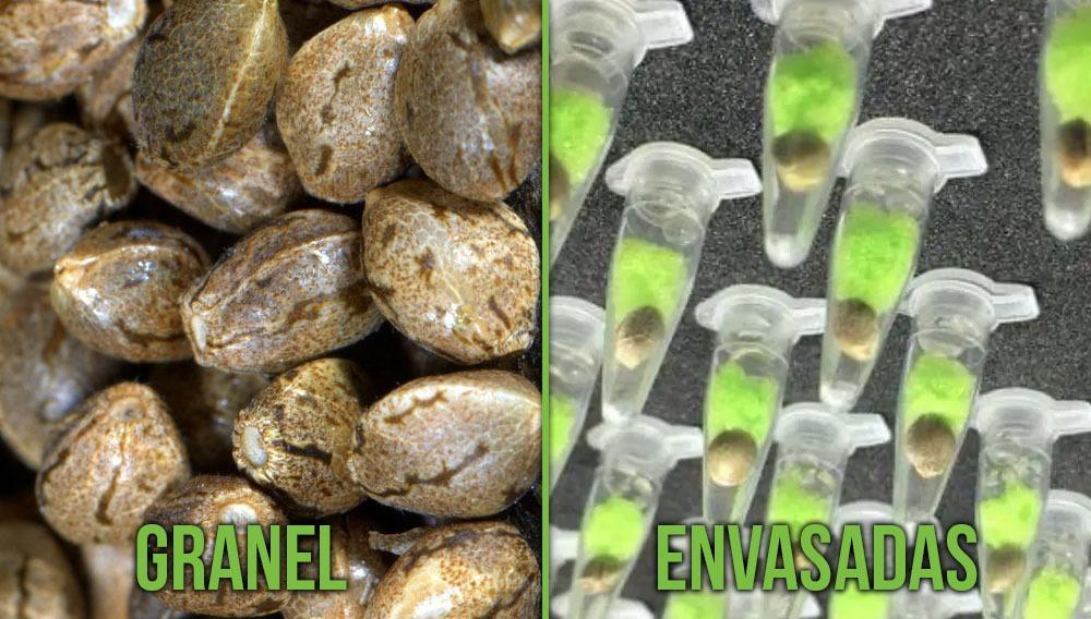 grandel vs envasadas