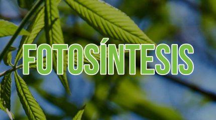 Portada del artículo sobre la fotosíntesis