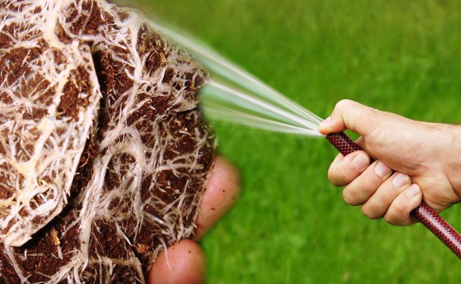 lavado de raíces