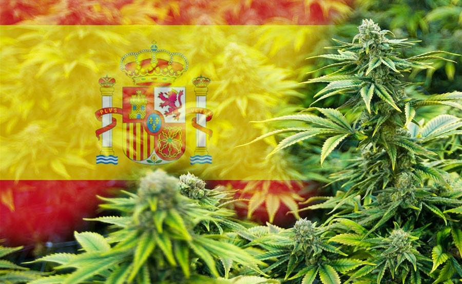 marihuana en españa