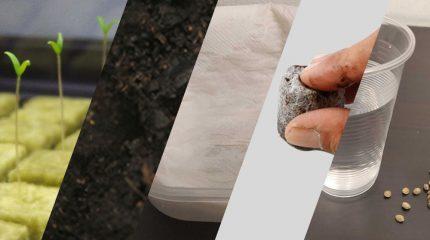 Portada del artículo que explica los diferentes métodos para germinar