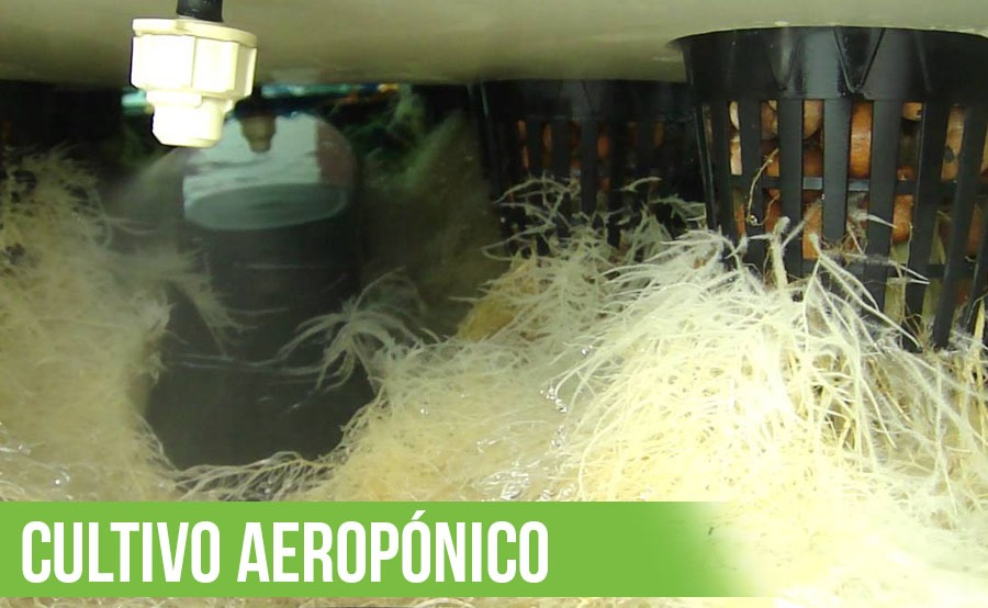 cultivo aeropónico