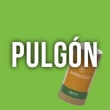 Pulgon