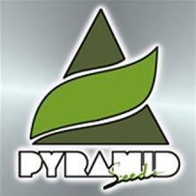 Pyramid Seeds Autoflorecientes