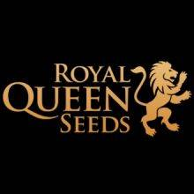 Royal Queen Seeds Autoflorecientes