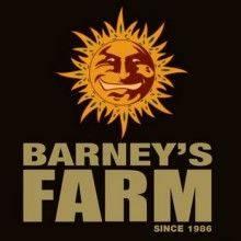 Barney's Farm Feminizadas