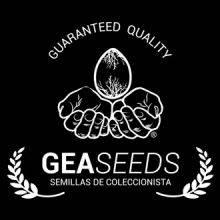 GeaSeeds Autoflorecientes