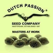 Dutch Passion Autoflorecientes