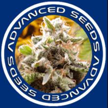 Advanced Seeds Autoflorecientes