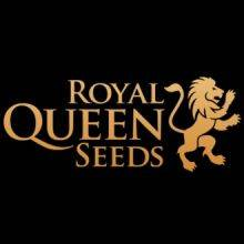 Royal Queen Seeds Feminizadas