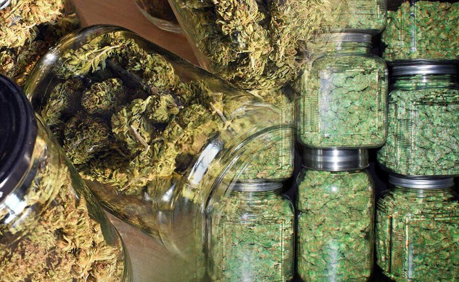 Marihuana curada