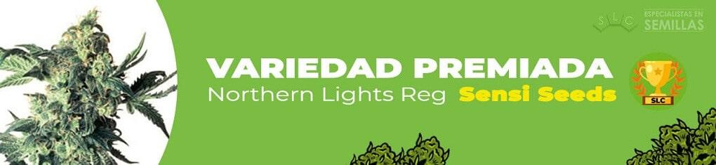 Northern lights regular de sensi seeds
