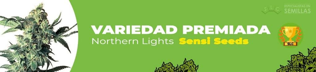 Northern lights de sensi seeds