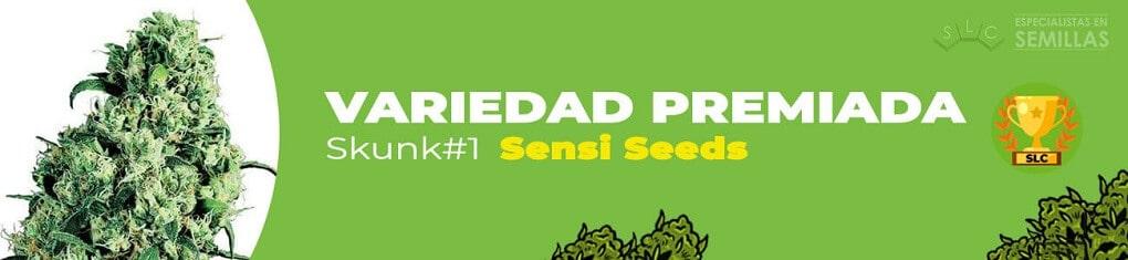 Skunk #1 de sensi seeds