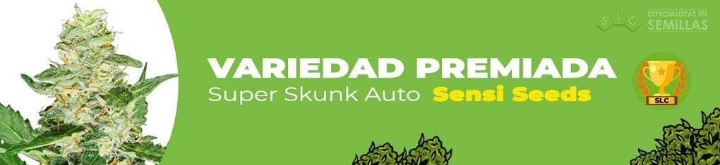 Super skunk auto de sensi seeds