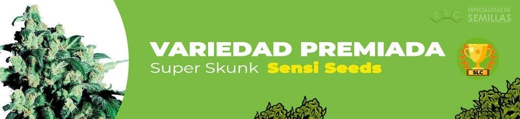 Super skunk de sensi seeds